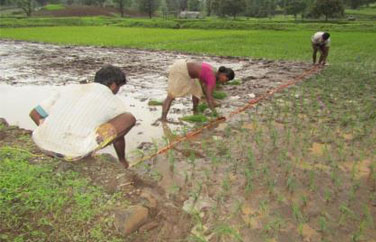 Improved Agriculture Practices